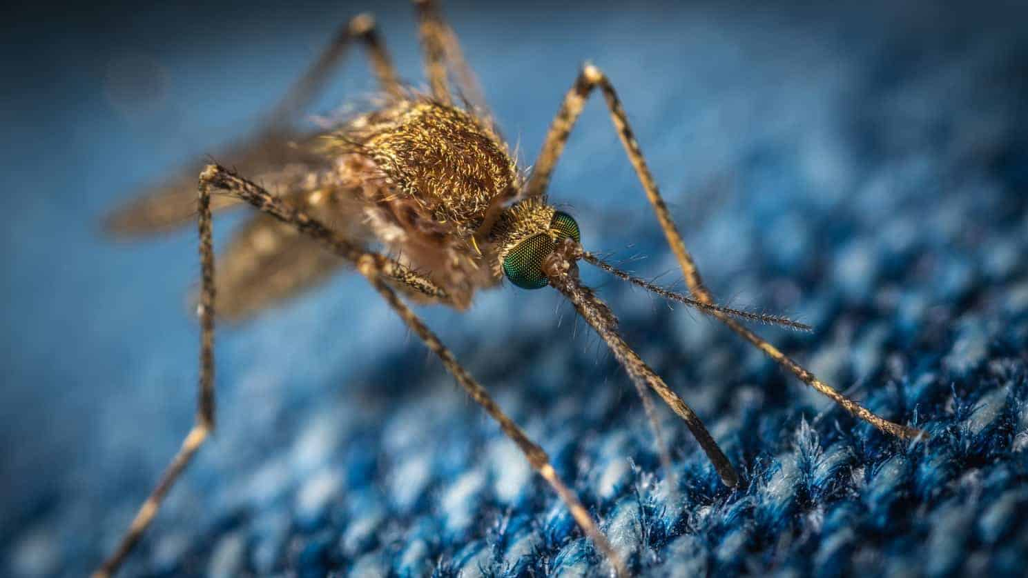How to keep Mosquitos away from your yard? - Wild Bird World