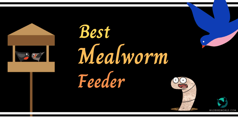 best meal worm feeder