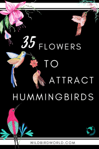 35 flowers to attract hummingbirds