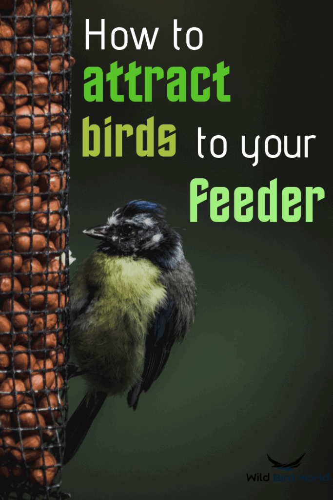 how to attract birds to a bird feeder
