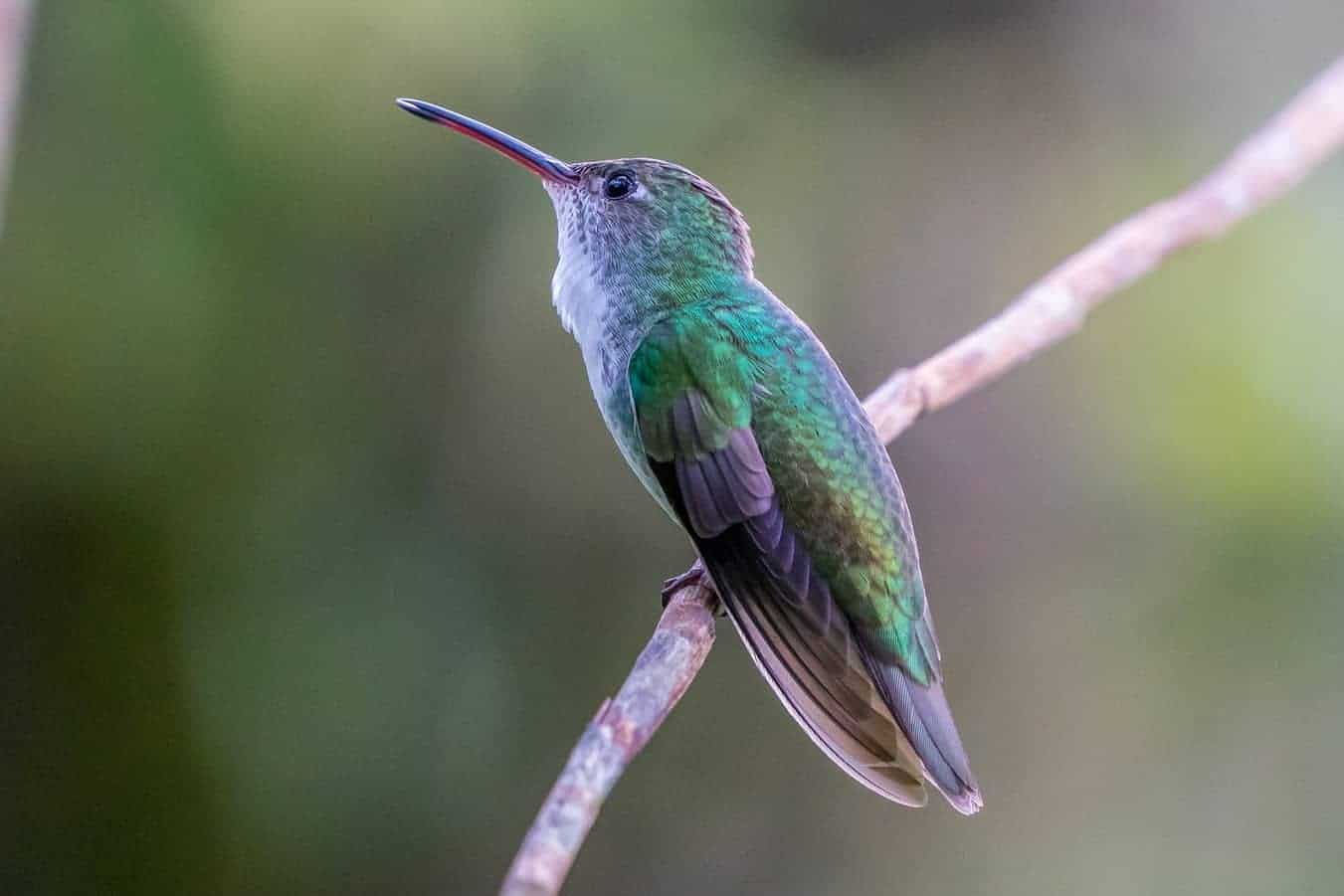 hummingbird sleeping