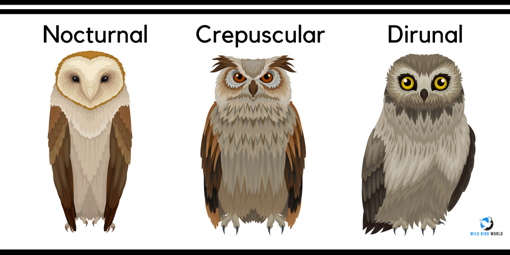 Types of owl