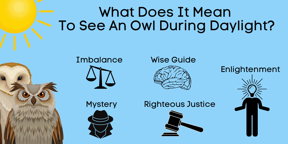 what does it mean to see an owl during daylight