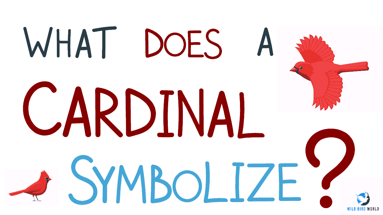 What does it mean to see a cardinal?