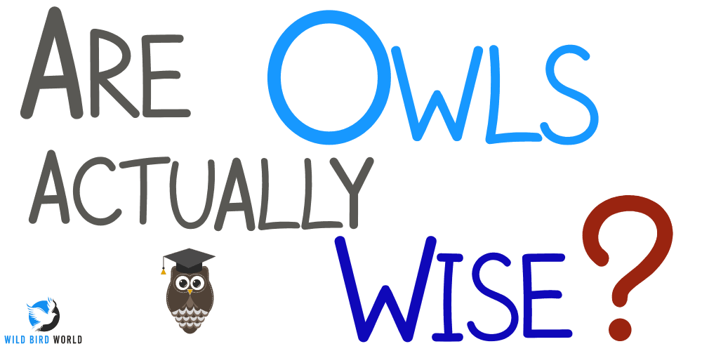 Are owls wise?