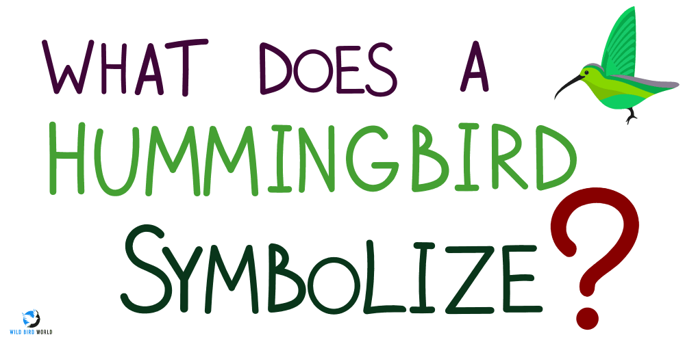 what does it mean to see a hummingbird?
