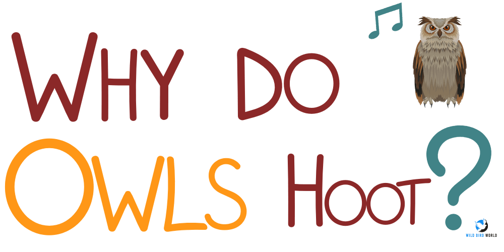 why do owls hoot