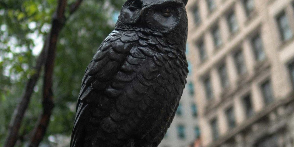 owls in new york