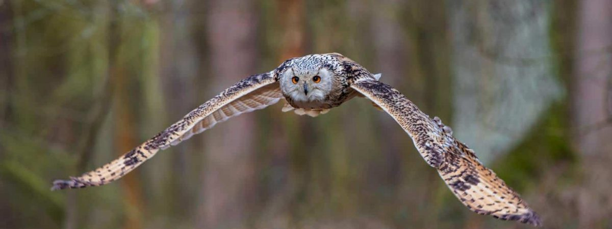 owls in new jersey